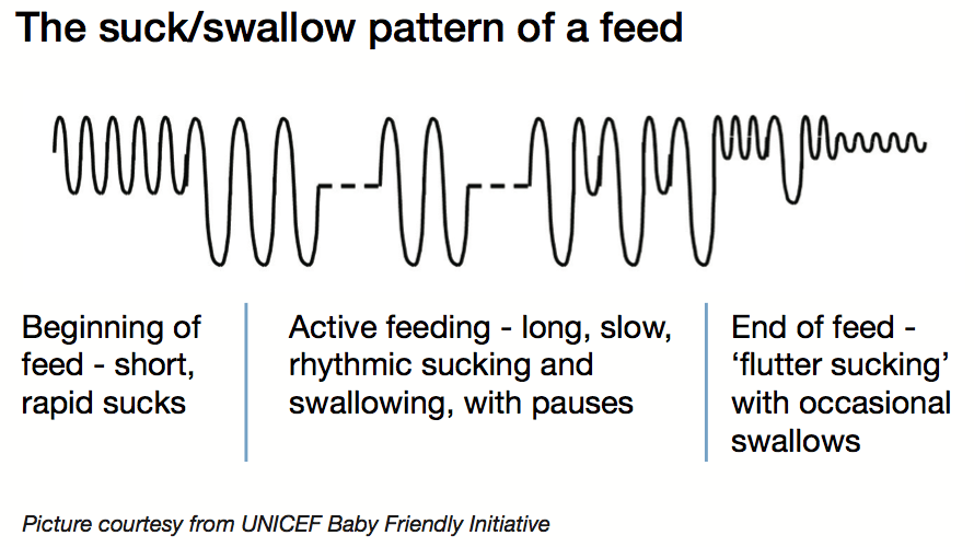 The suck:swallow pattern of a feed