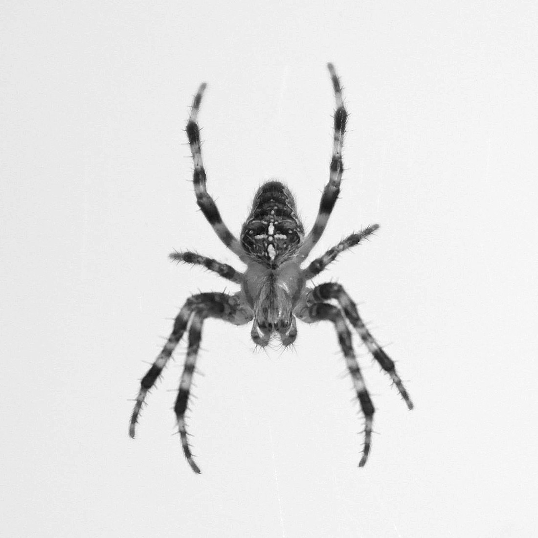 Spider the black amp white photography project mama geek