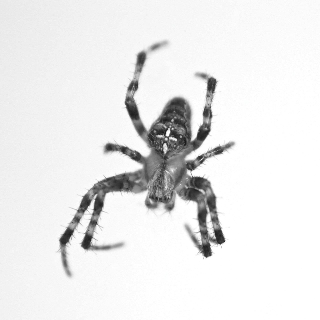 618778045720 together with Samsung Galaxy Note 3 Glass Lens Screen Black moreover Samsung Galaxy S4 How To Enable furthermore Spider Black White Photography Project further 252056762719. on samsung galaxy zoom