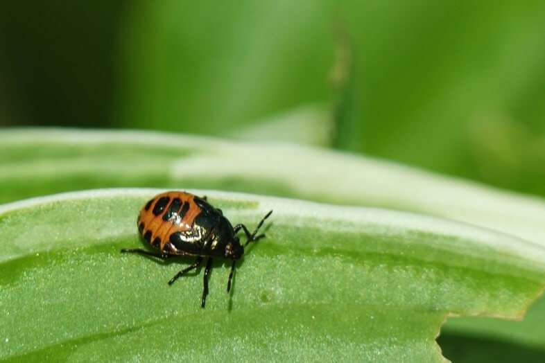 Baby ladybird