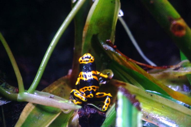 frog - Sea Life Birmingham