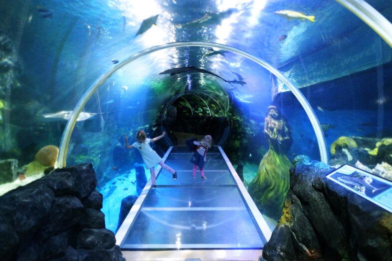 Ocean tunnel - Sea Life Birmingham