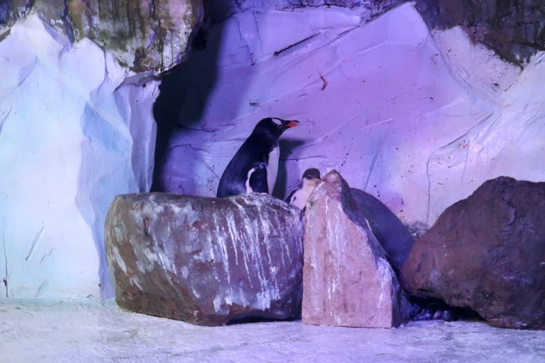 Baby Penguin at Sea Life Centre