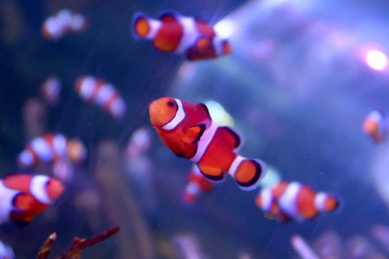 ClownfishSea Life Centre