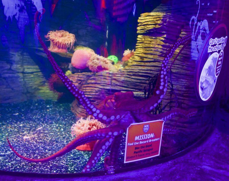 Octopus at Sea Life Birmingham