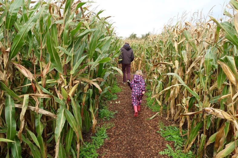 National Forest Adventure Farm - Mummy Maize Maze