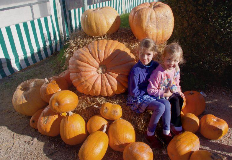 Pumpkin Week at Hatton