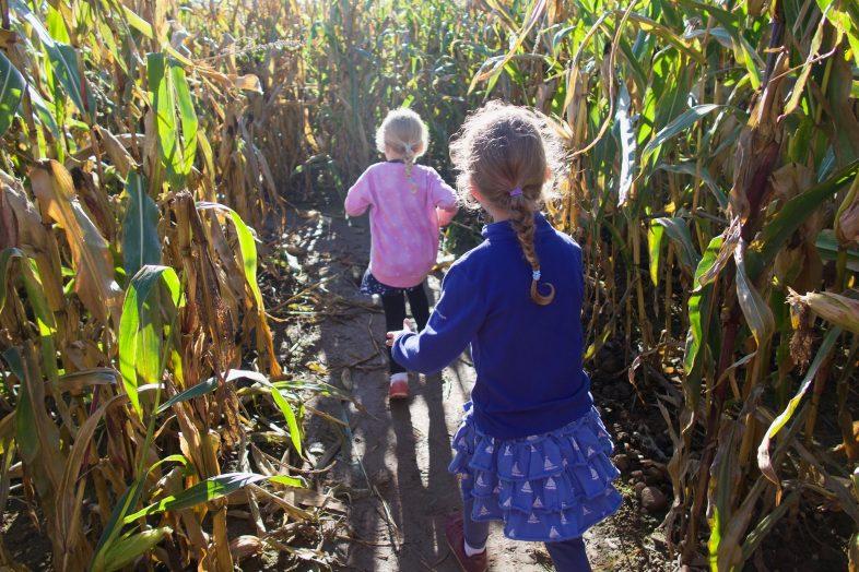 Maize Maze - Pumpkin Week at Hatton