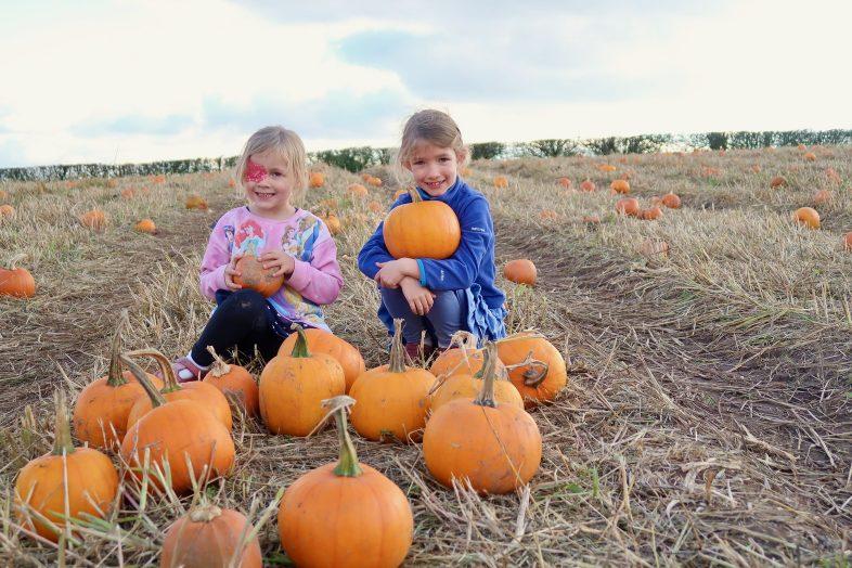 Pumpkin Patch - Pumpkin Week at Hatton