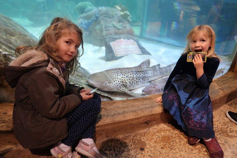 Georgie, Lydia and the zebra shark